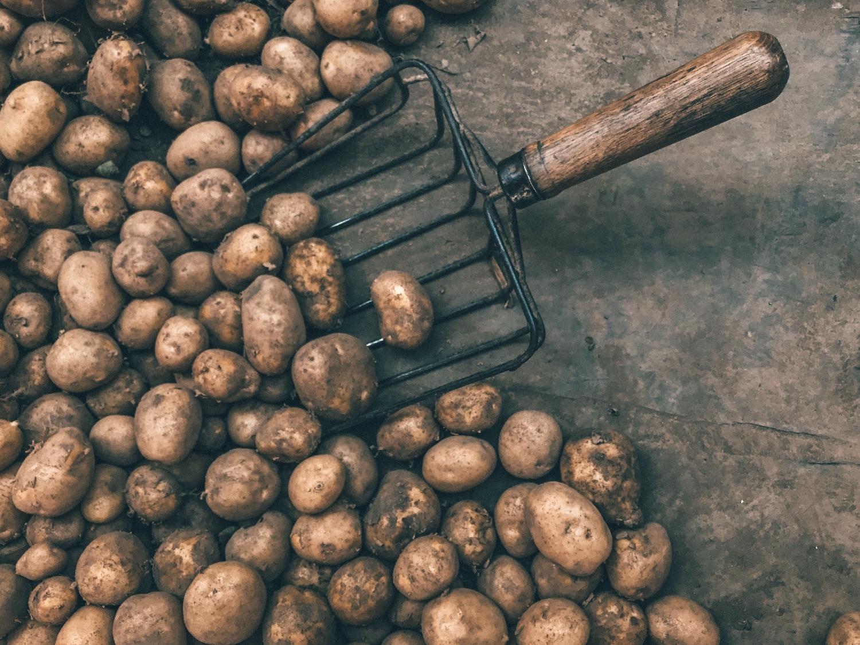 Patří brambory do zdravé výživy?