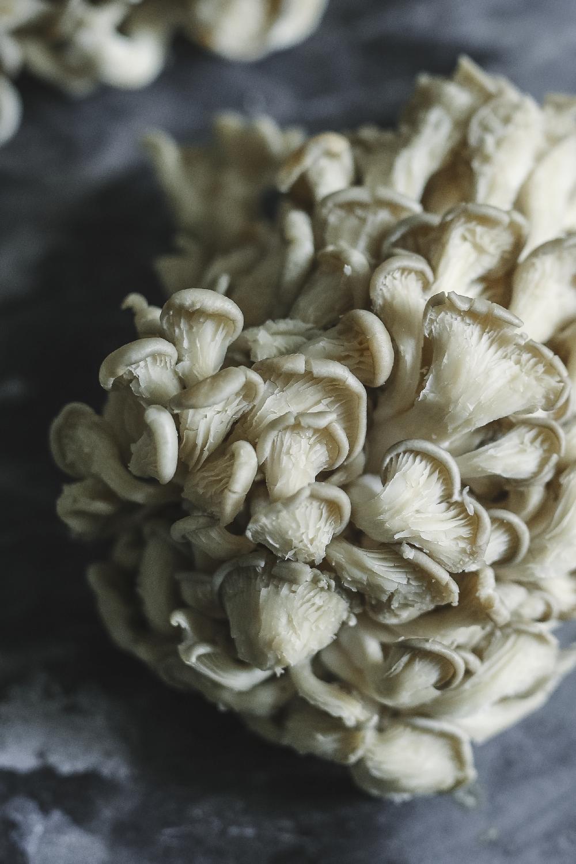 Jak pěstovat houby v kávové sedlině
