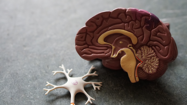 Jak trénovat mozek, aby byl kreativnější?